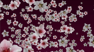 cherryblossoms_small