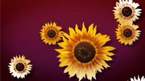 fadedsunflowers_small