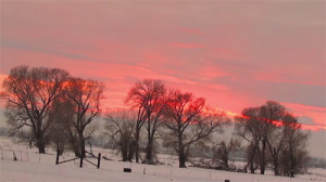 pinkwintersunrise_small