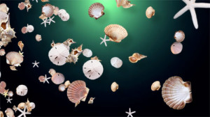 seashells_small