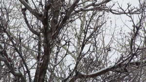 snowytreebranches_small