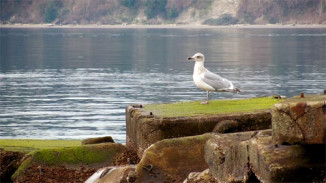 seagull_small