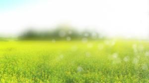 springgreen_small